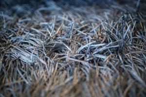 Carpet fringes
